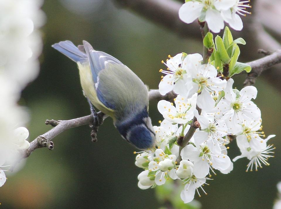 Ptaki_nektar_01