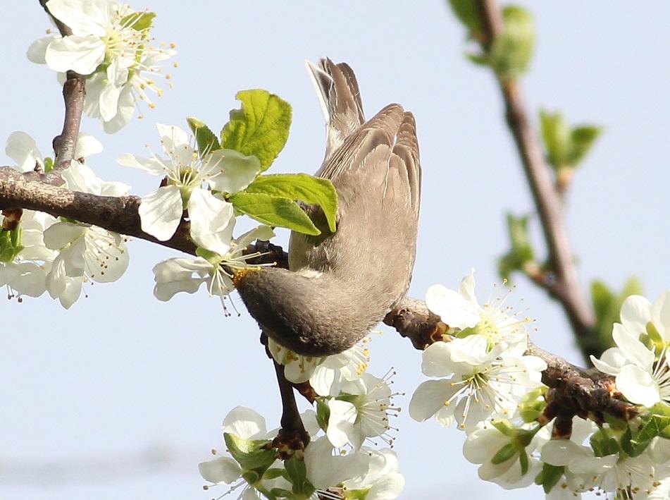 Ptaki_nektar_02