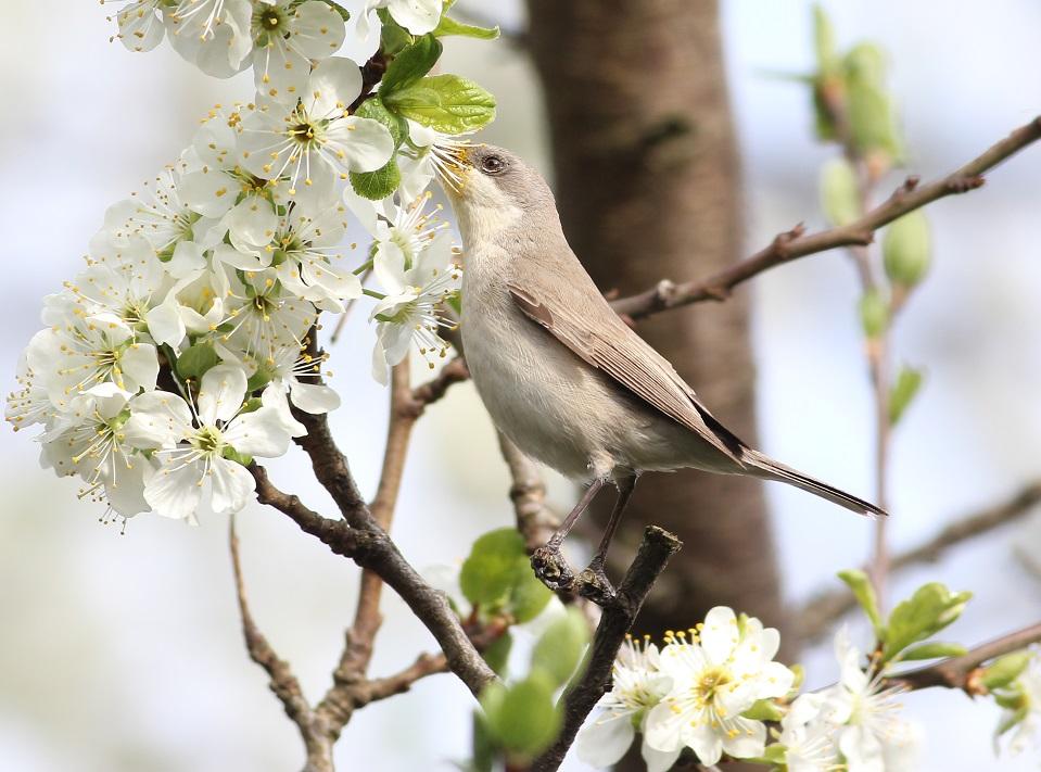 Ptaki_nektar_03