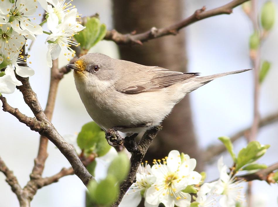 Ptaki_nektar_04