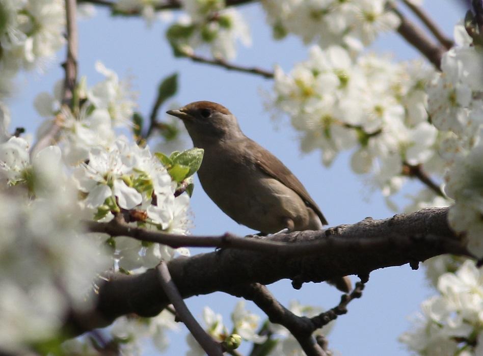Ptaki_nektar_05