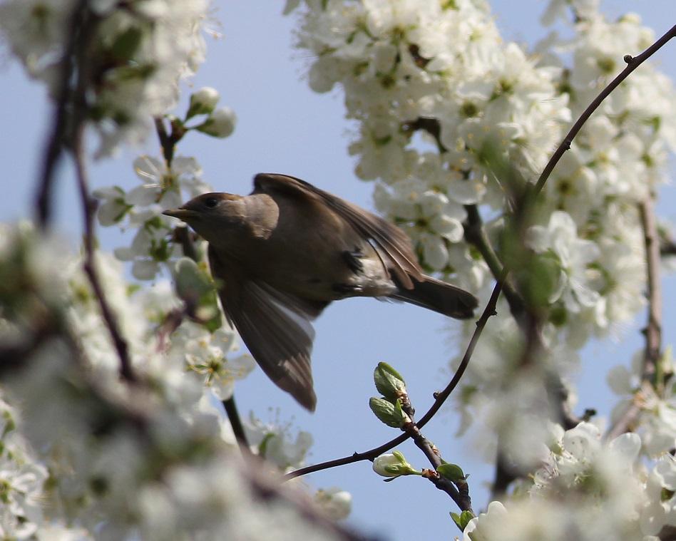 Ptaki_nektar_06