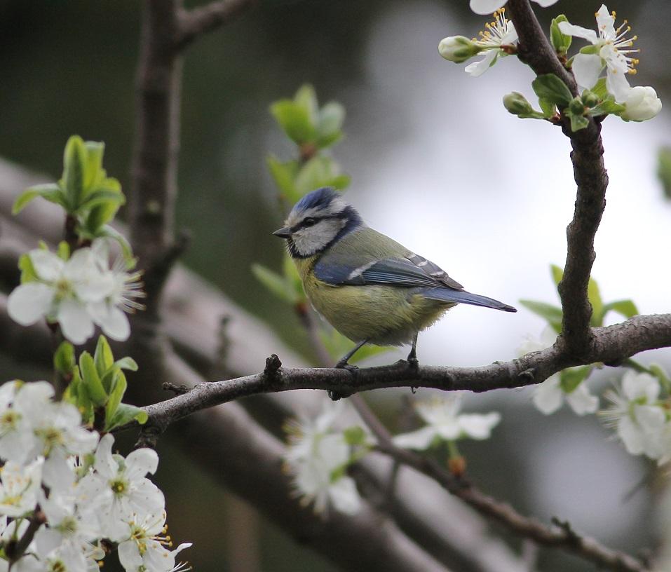 Ptaki_nektar_07
