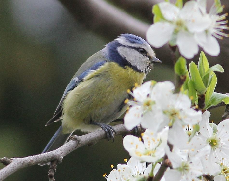 Ptaki_nektar_08