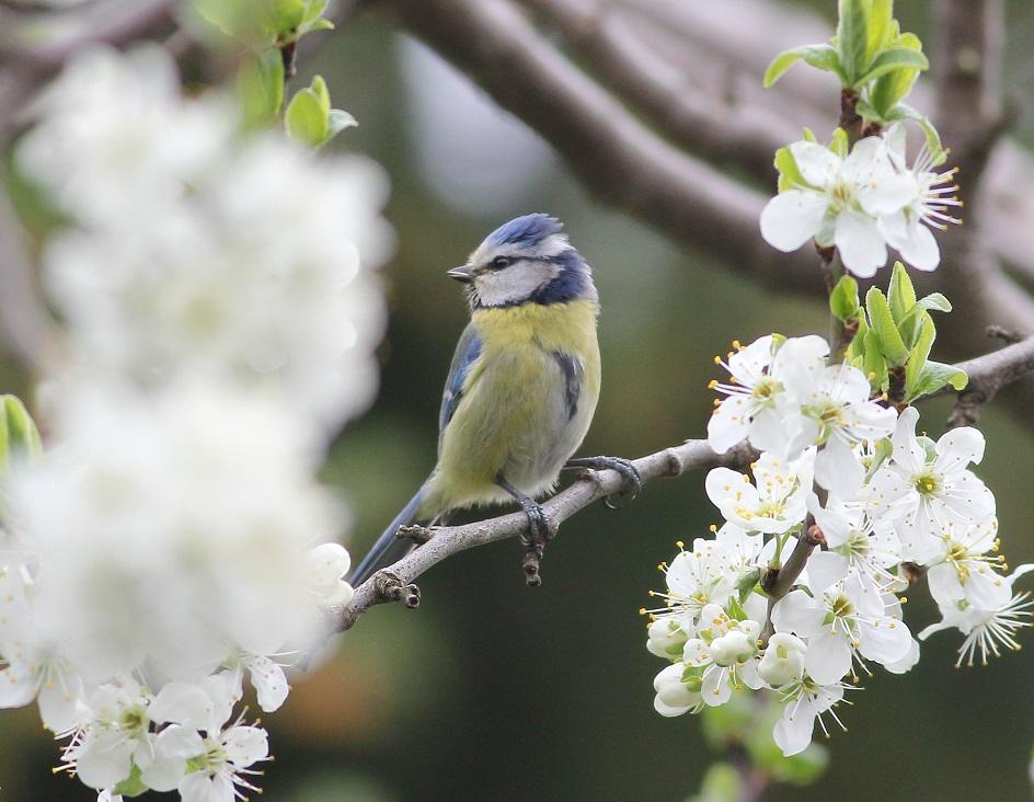 Ptaki_nektar_09
