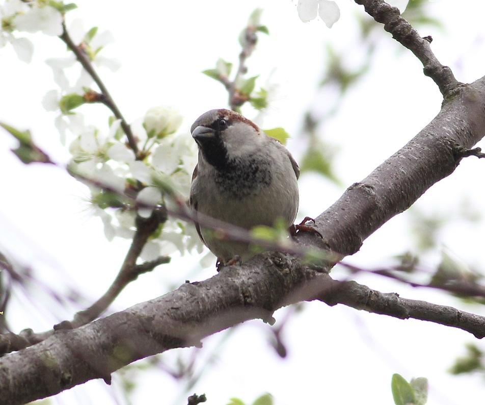 Ptaki_nektar_10