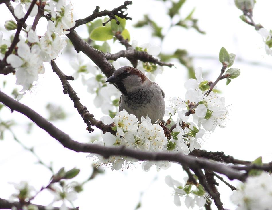 Ptaki_nektar_12