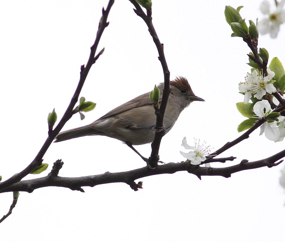 Ptaki_nektar_13