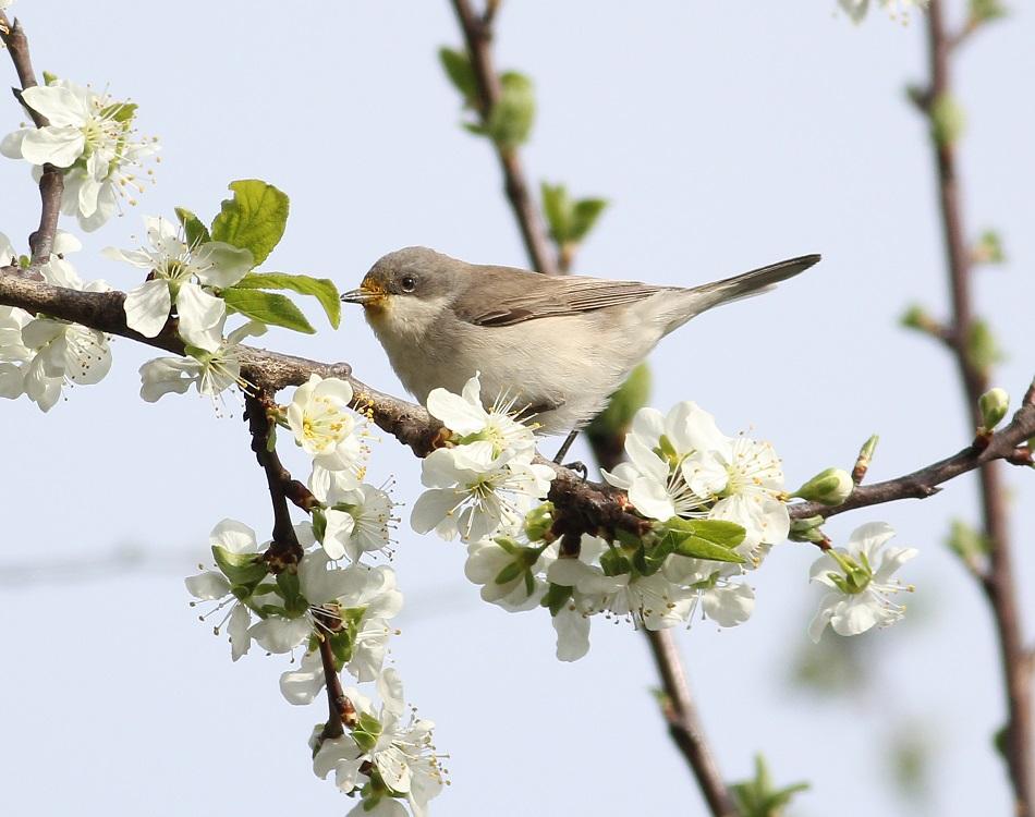 Ptaki_nektar_14