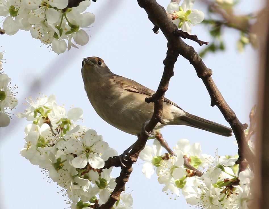 Ptaki_nektar_15