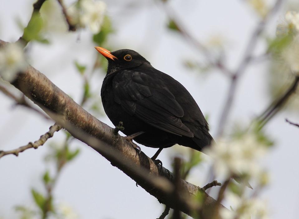 Ptaki_nektar_20