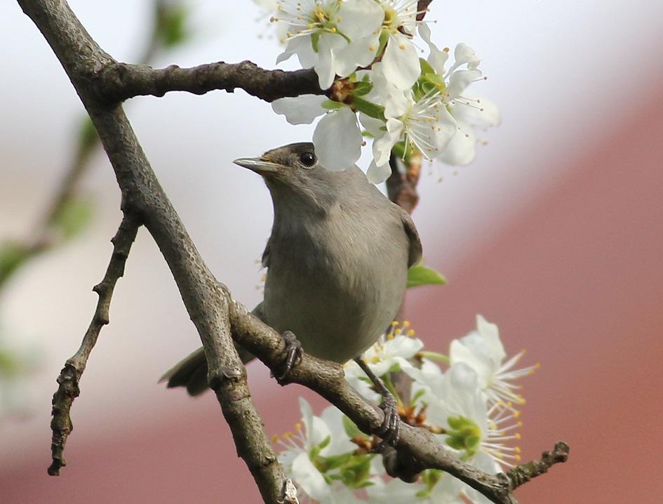 Ptaki_nektar_21