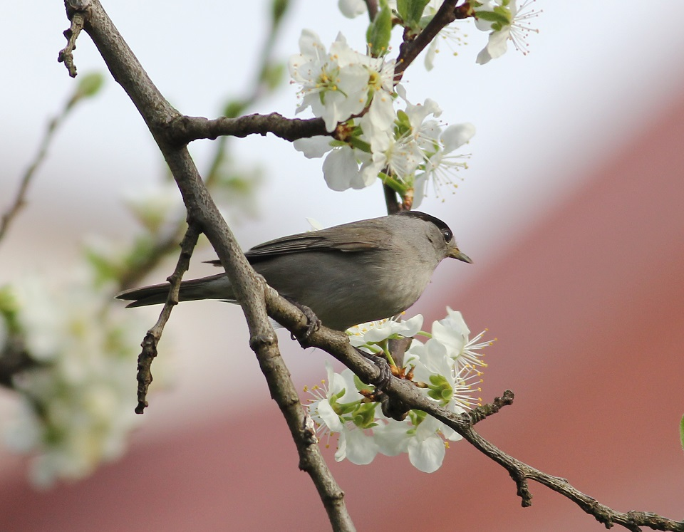 Ptaki_nektar_22