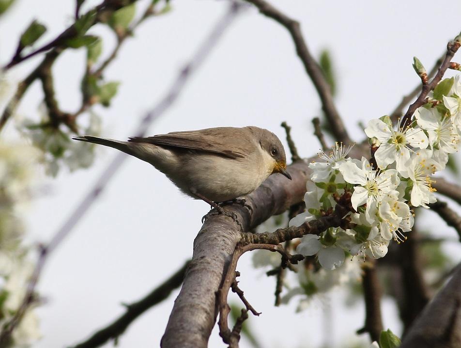 Ptaki_nektar_23