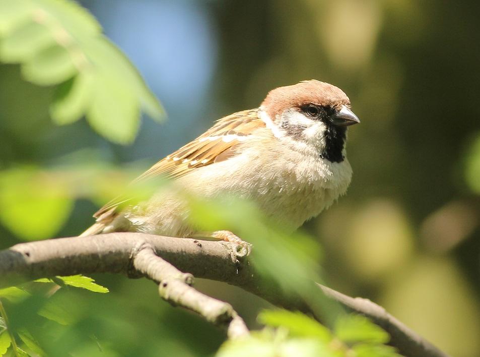 Ptaki_sasiedzi_01