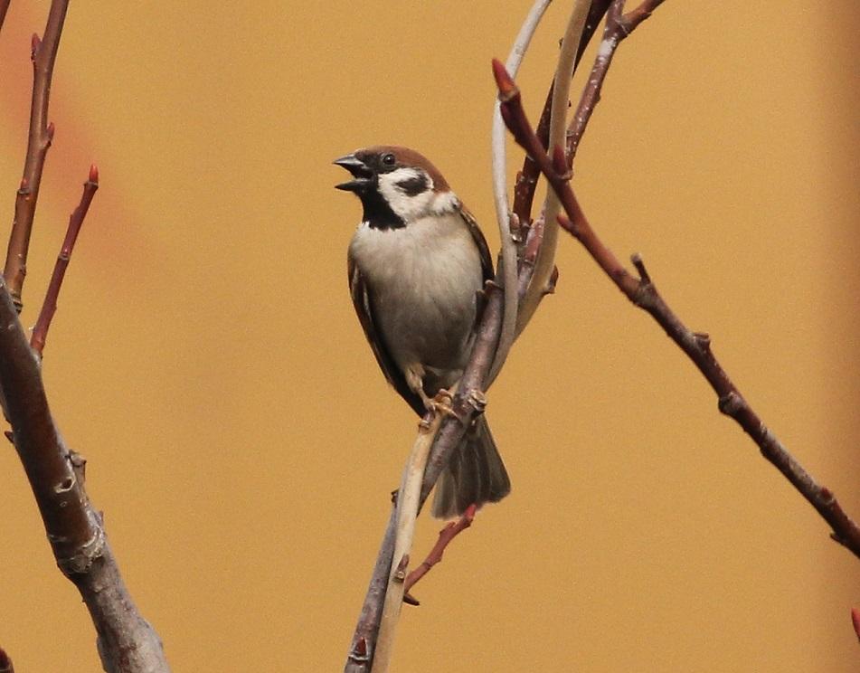 Ptaki_sasiedzi_07
