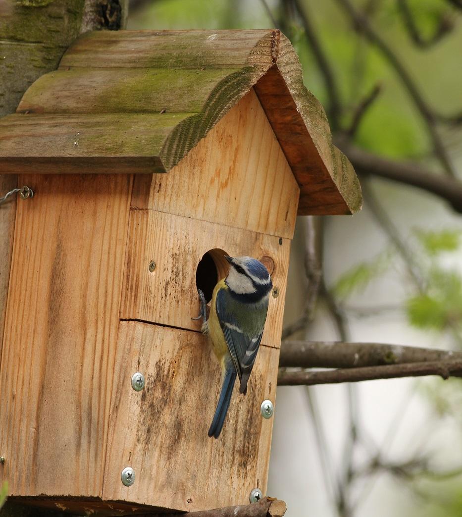 Ptaki_sasiedzi_11