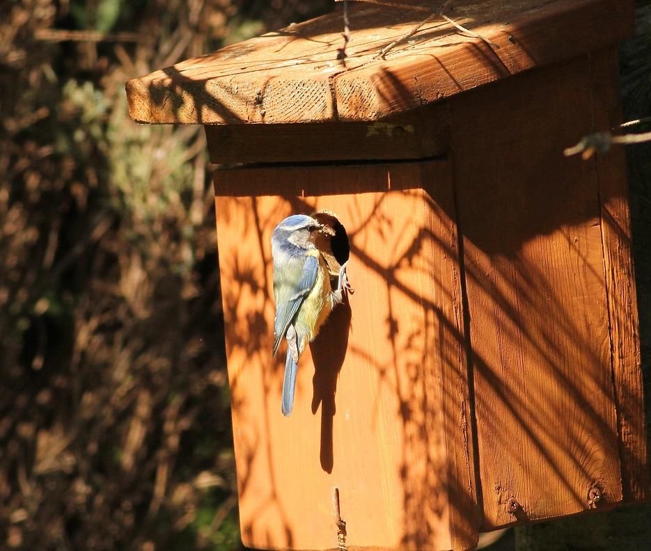 Ptaki_sasiedzi_12