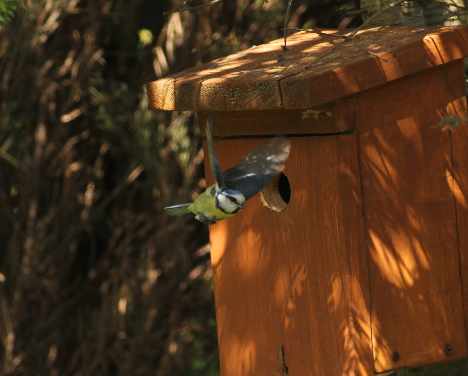 Ptaki_sasiedzi_14