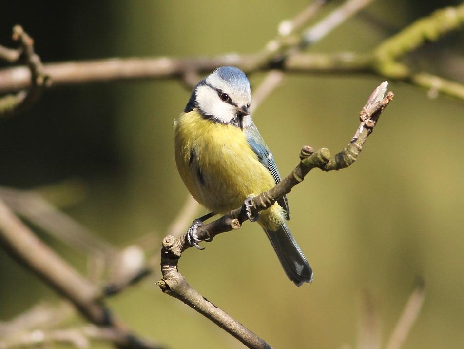 Ptaki_sasiedzi_15