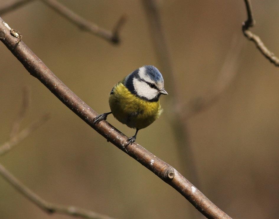 Ptaki_sasiedzi_16