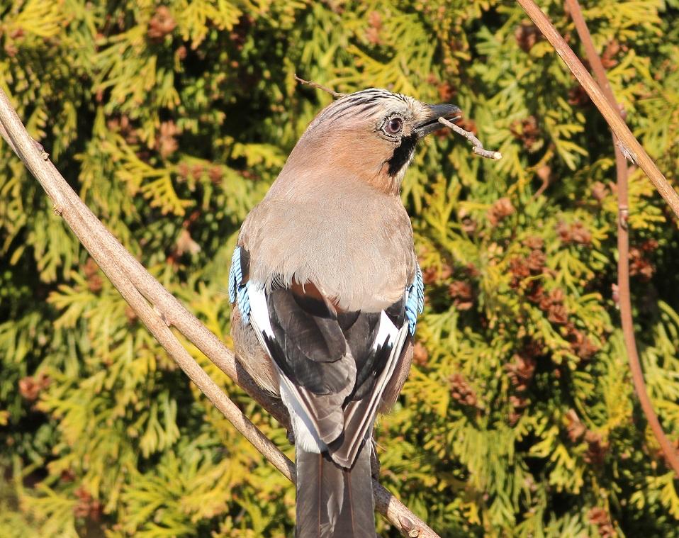 Ptaki_sasiedzi_18