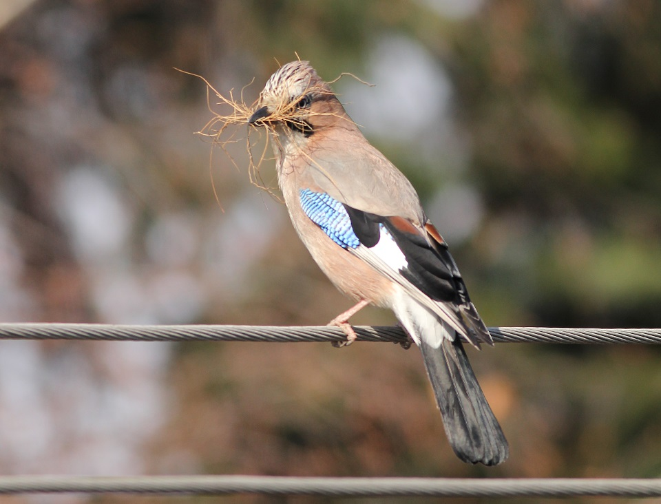 Ptaki_sasiedzi_19