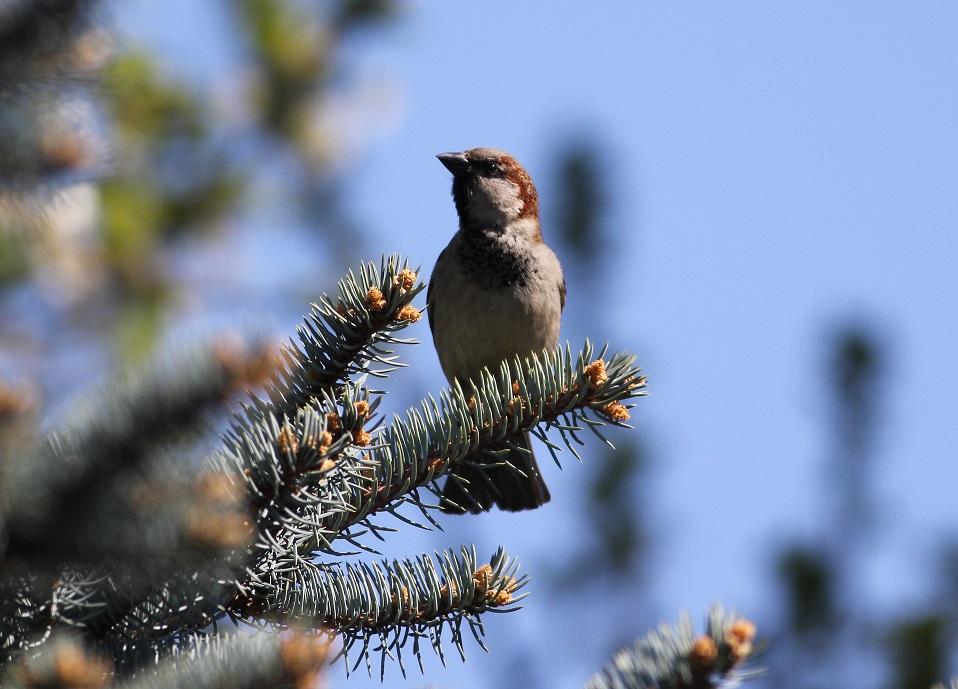 Ptaki_sasiedzi_21