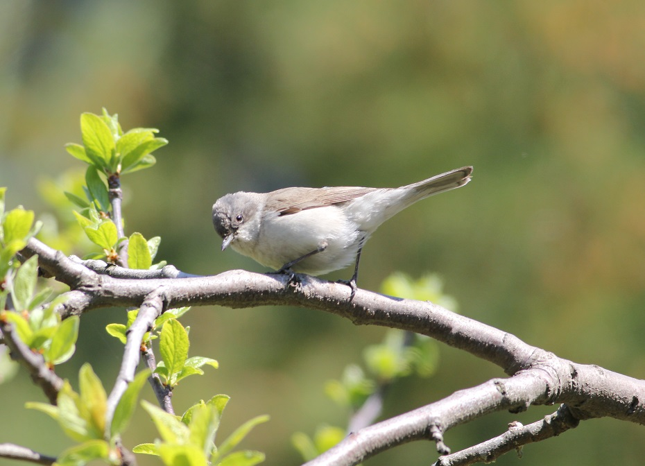 Ptaki_sasiedzi_24