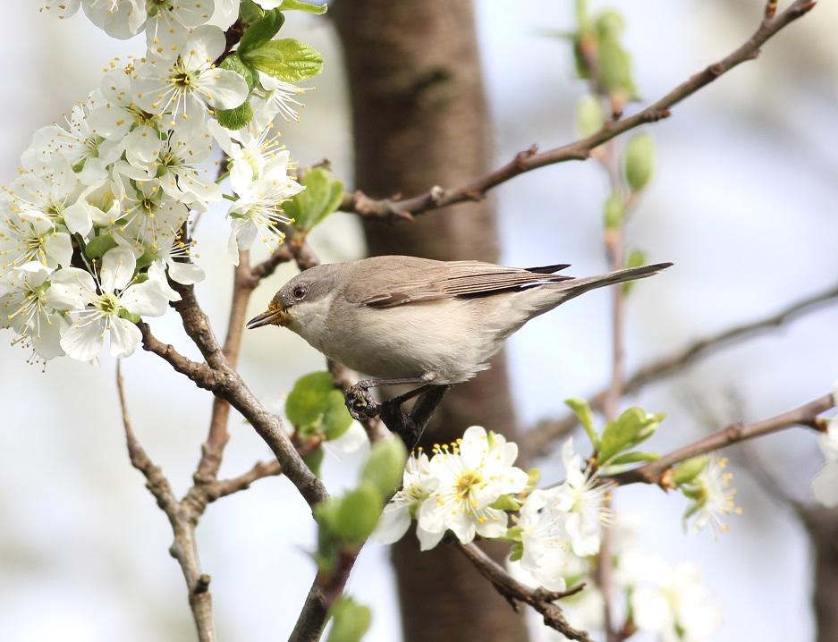 Ptaki_sasiedzi_25