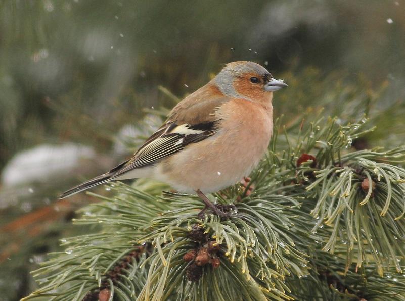Ptaki_45