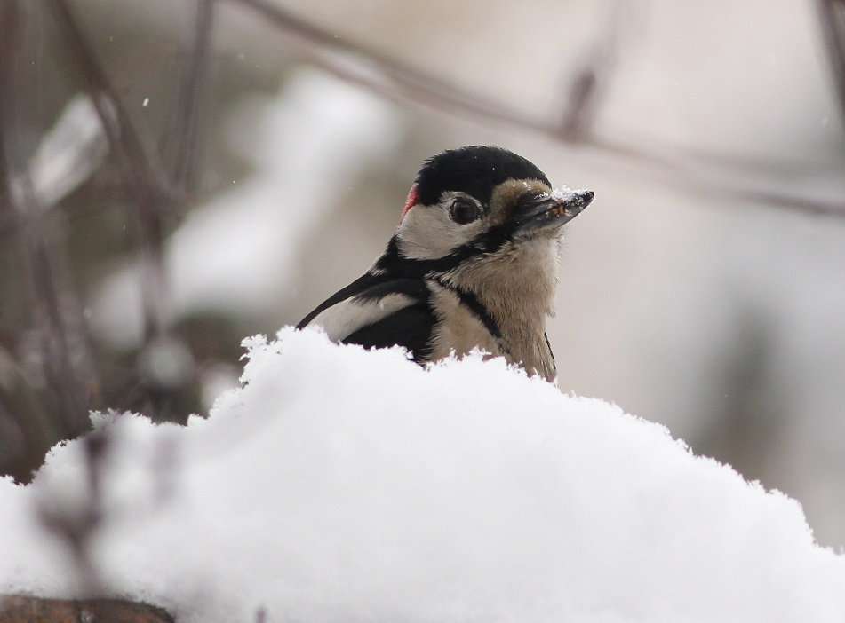 wśród śniegu 01