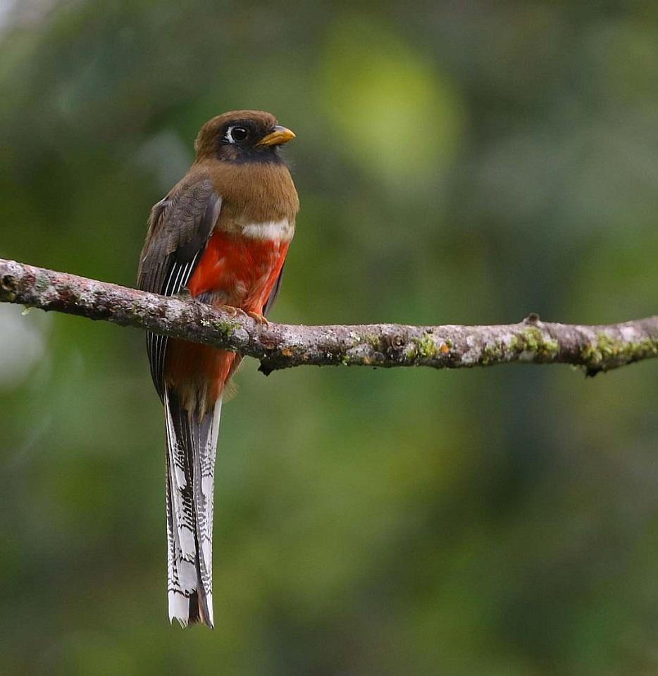 najpiękniejsze ptaki